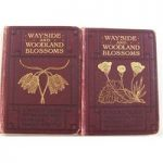 Wayside and Woodland Blossoms: A Pocket Guide to British Wild Flowers; Series I & Series II