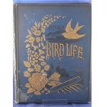 Pictures of Bird Life in Pen and Pencil