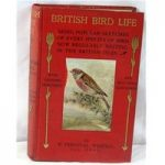 British Bird Life: Being Popular Sketches of Every Species Of Bird Now Regularly Nesting In The British Isles.