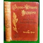 Wayside and Woodland Blossoms: a pocket guide to British wild-flowers for the country rambler